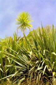 14-plant