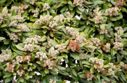20-bloemknoppen
