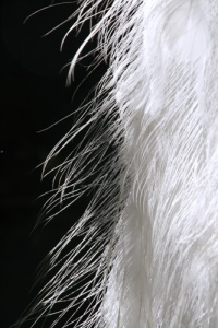 27 pauweveer