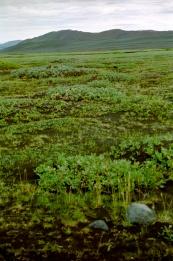 11-landschap