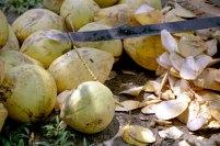 87 cocosnoten