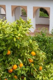 32-sinaasappels