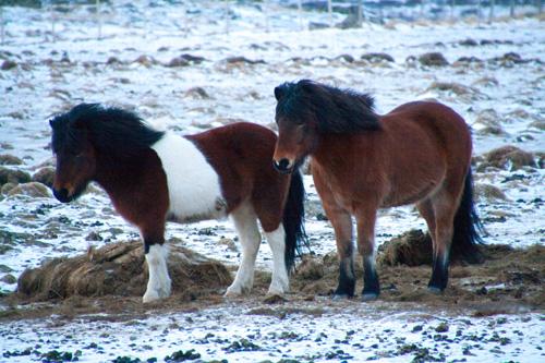 158 paarden