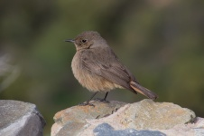 1158-vogeltje