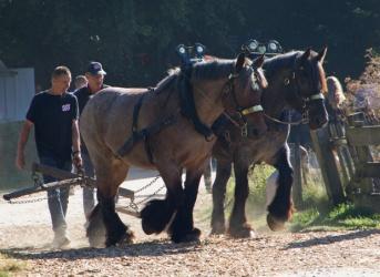 06-paarden
