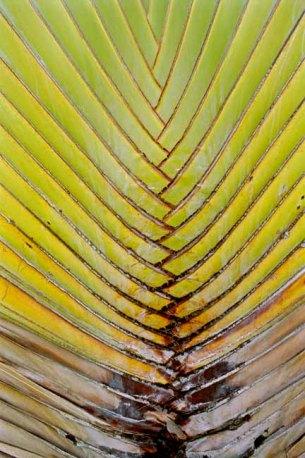 09-palmblad