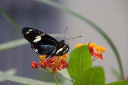 16 vlinder