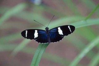 34 vlinder