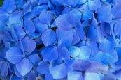 67 blauw