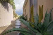 1311 cactus