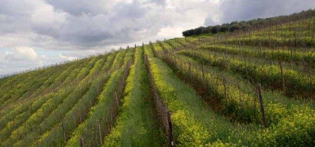 1352 wijn