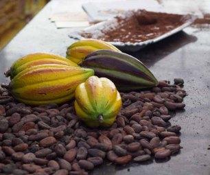 01 cacaobonen
