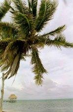 16 palm