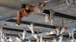 308 plafond