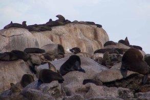 855 zeeleeuwen
