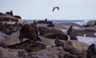 856 zeeleeuwen