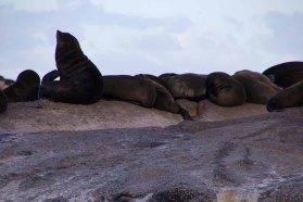 860 zeeleeuwen