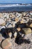 900 zeewier