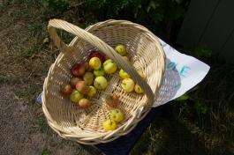 250 appels