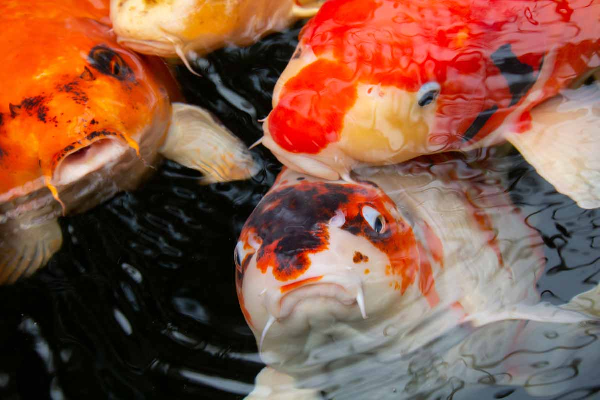 Fotogenieke vissen
