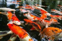 15 vissen