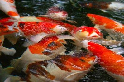 23 vissen