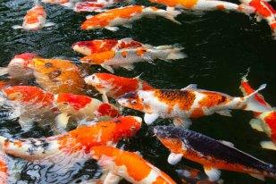 25 vissen