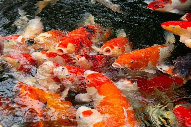 26 vissen