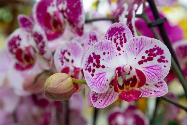 61 orchidee