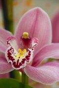 65 orchidee