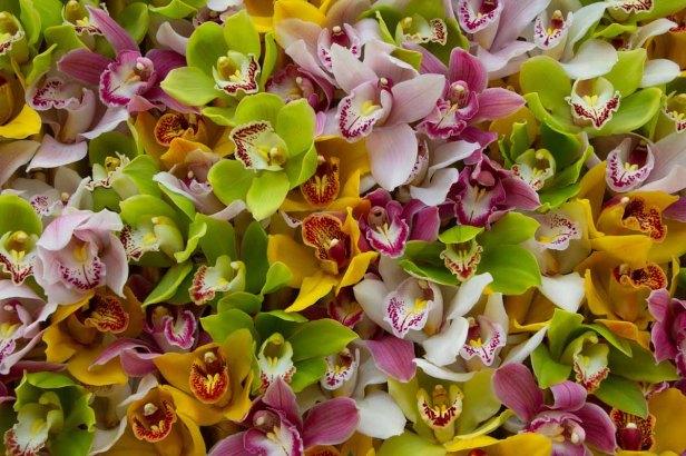 68 orchideeen