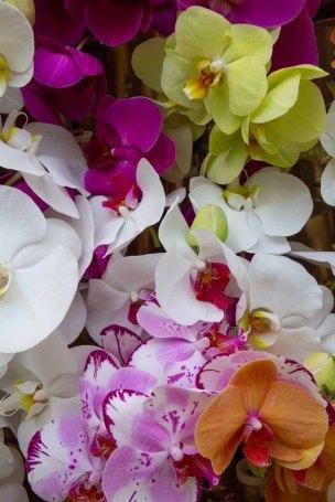 70 orchideeen