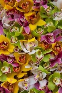 71 orchideeen