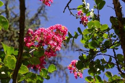 87 bloemen