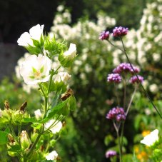 08 bloemen