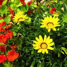 09 bloemen