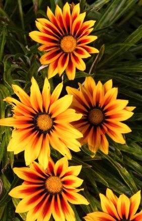 13 bloemen