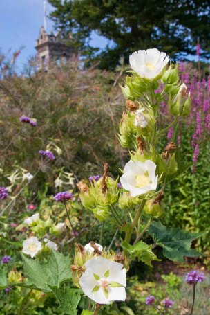 18 bloemen