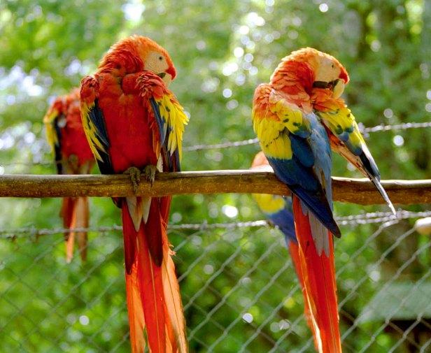01 papegaaien