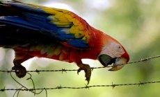 02 papegaai