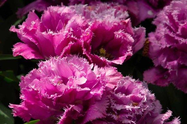 05 roze