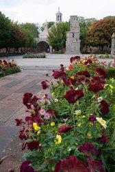 184 bloemen