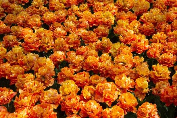 40 oranje
