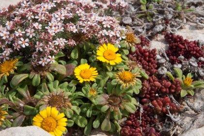 88 bloemen