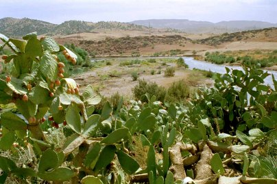 92 cactus