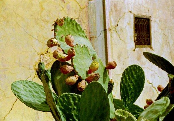 95 cactus