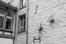 64 spinnen