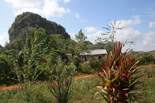 131 plant in landschap