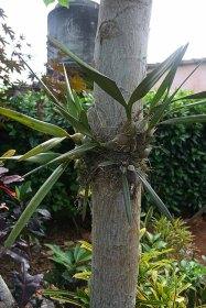 166 plant op boom