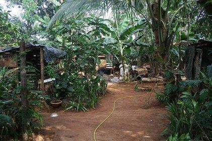 168 tuin